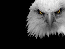 rêver d'aigle en islam.