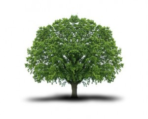 Rever D Arbre Signification Et Interpretation En Islam