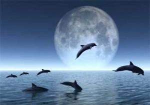rêver de dauphin.