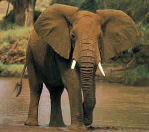 reve-elephant-islam