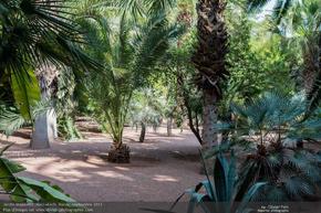Rever De Jardin Signification Et Interpretation En Islam