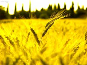 rêver de jaune.