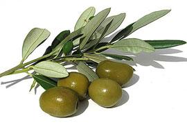 rever-de-olive