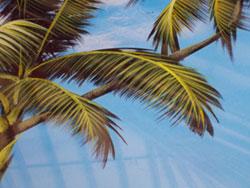 rever-de-palmier