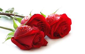 Rever De Rose En Islam