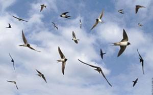 rever-d'oiseaux