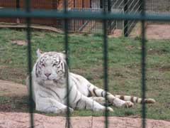 rever-de-zoo