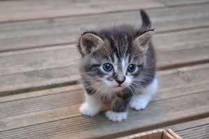 rêver de chaton.